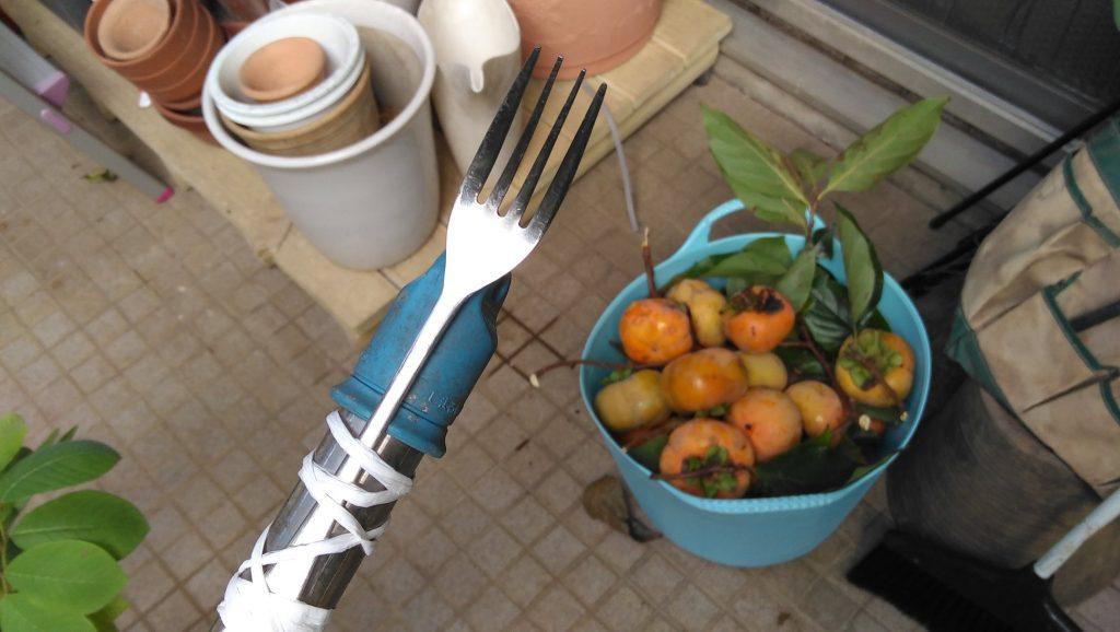 物干し竿とフォークによる柿取り棒