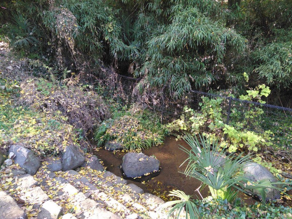 恩田川源流の泉