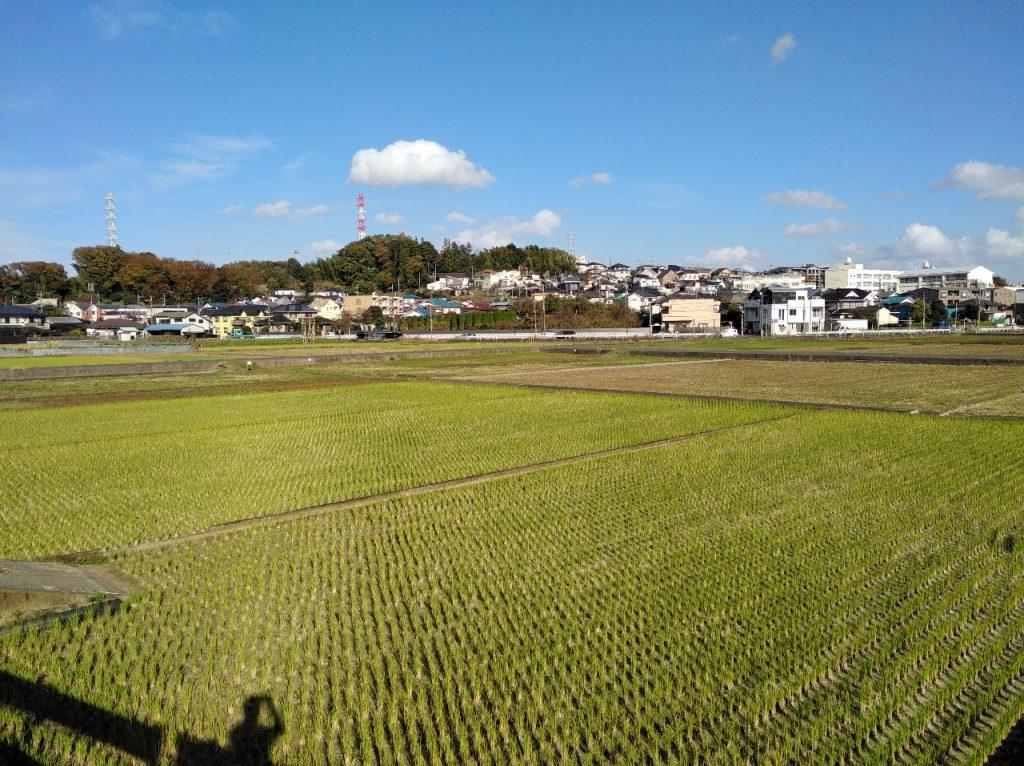 稲刈りが終わった田奈の田園地帯